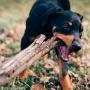 Cosa rischio se il mio cane morde una persona o un altro animale?